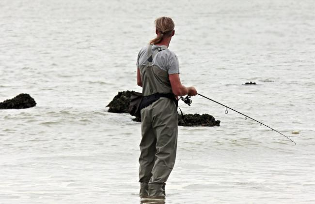 Could this be a bumper year for anglers catching sea bass in the Teifi estuary?