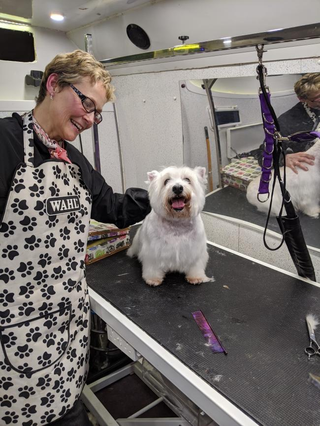 Newcastle Emlyn firm Dog & Bone Grooming is looking to expand