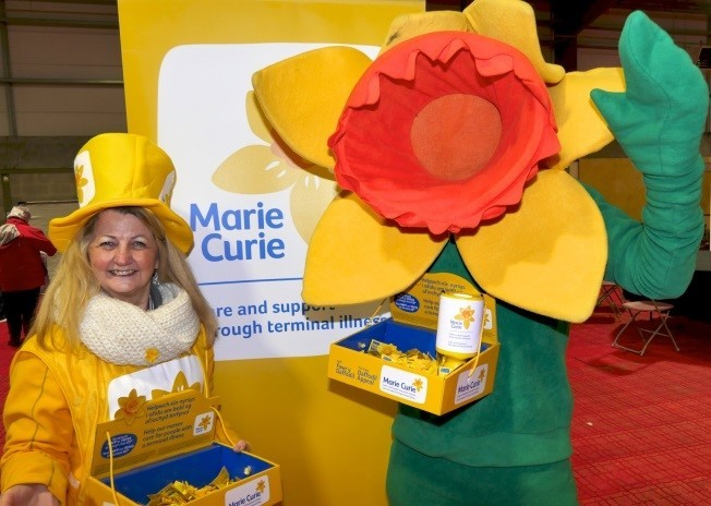Can you help the Marie Curie daffodil appeal in Cardigan and Newcastle Emlyn?