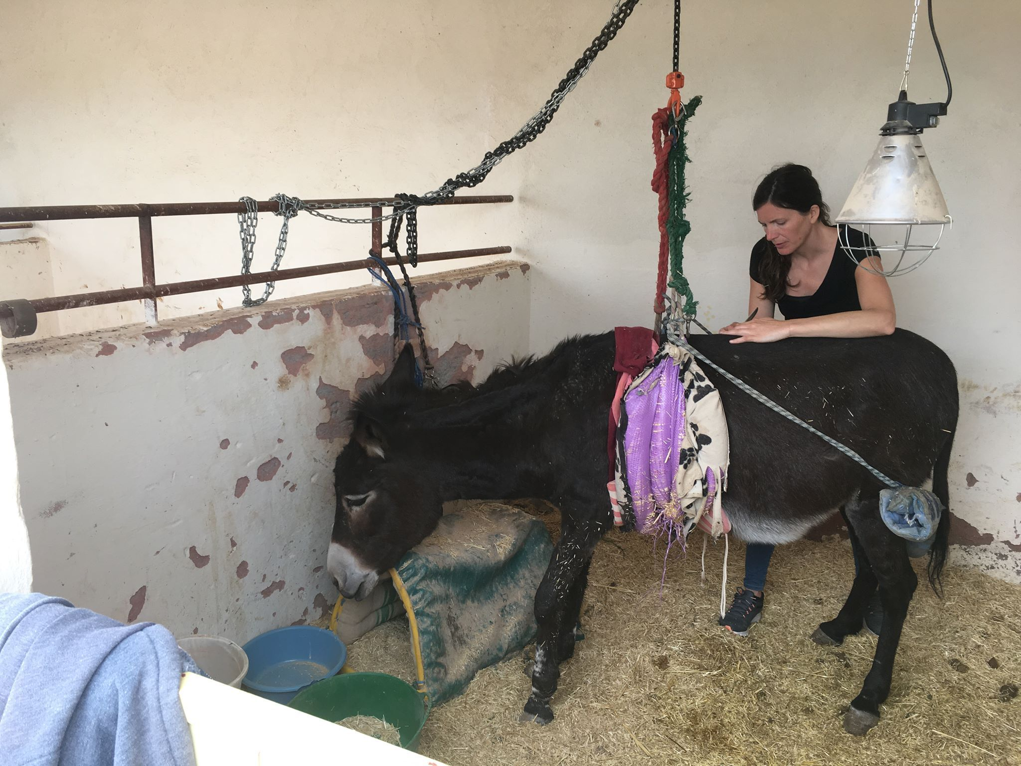 Sarah Wilkinson took time out of her holiday in Morocco to help nurse Julie the donkey back to health