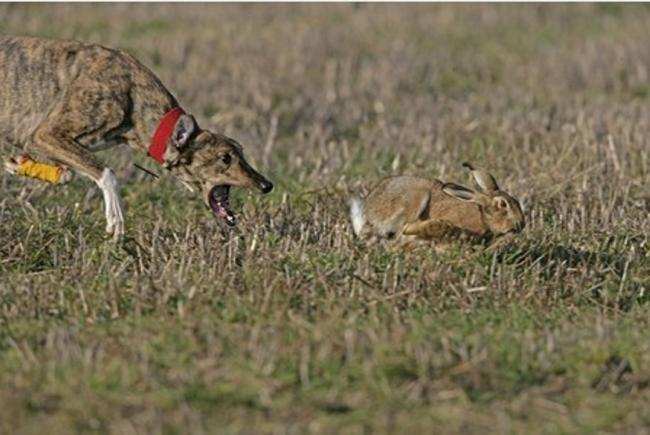 Police are investigating reports of hare coursing