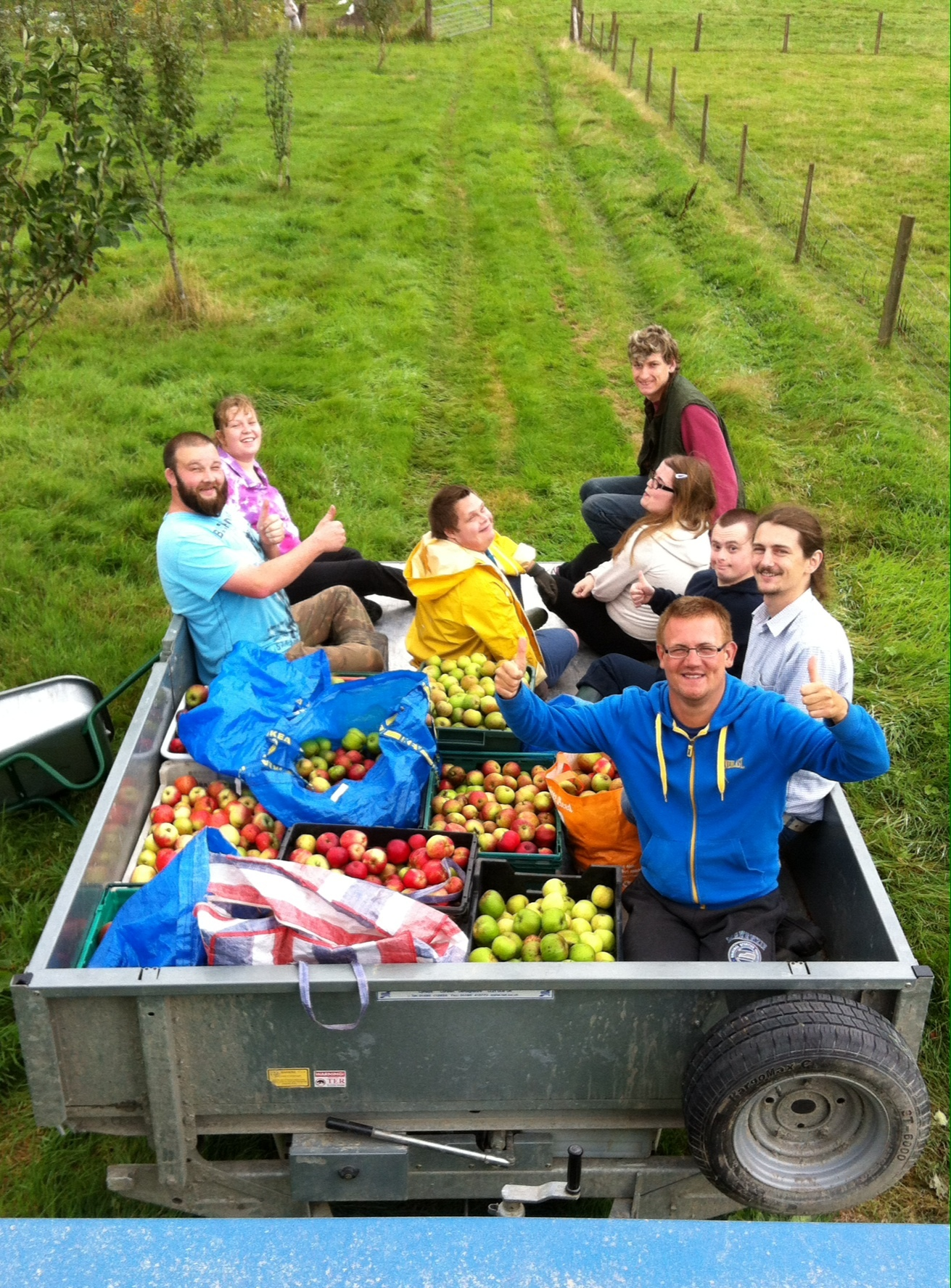Bringing in the apple harvest at Clynfyw Care Farm